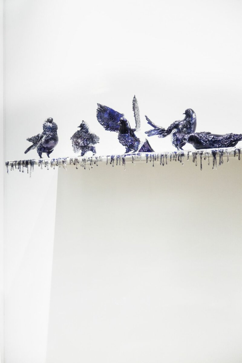 Jan Fabre, Shitting Doves of Peace and Flying Rats, installation view